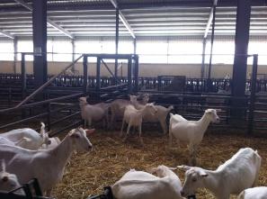 Dairy Khoury 010